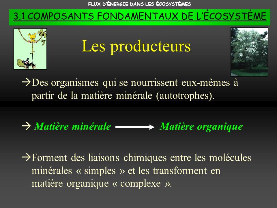FLUX DÉNERGIE DANS LES ÉCOSYSTÈMES 3.1 COMPOSANTS FONDAMENTAUX DE LÉCOSYSTÈME 1.Les photosynthétiseurs 2.Les chimiosynthétiseurs 2 types de producteurs