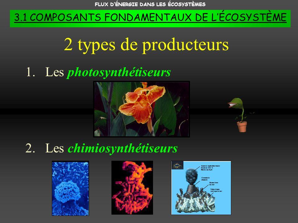 FLUX DÉNERGIE DANS LES ÉCOSYSTÈMES 3.1 COMPOSANTS FONDAMENTAUX DE LÉCOSYSTÈME 1.Les photosynthétiseurs 2.Les chimiosynthétiseurs 2 types de producteur