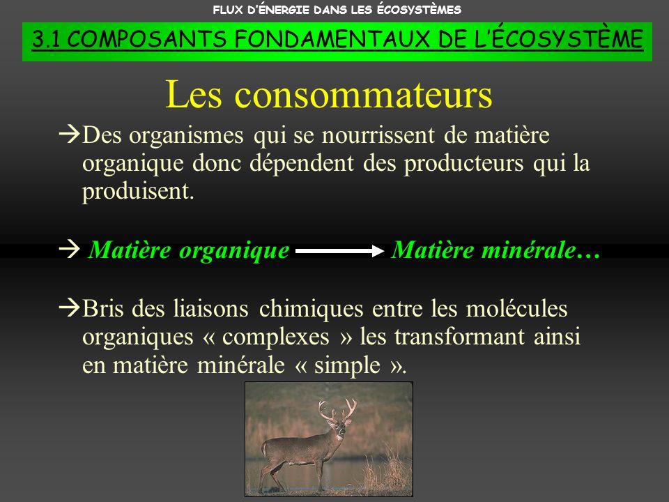 FLUX DÉNERGIE DANS LES ÉCOSYSTÈMES 3.1 COMPOSANTS FONDAMENTAUX DE LÉCOSYSTÈME Des organismes qui se nourrissent de matière organique donc dépendent de