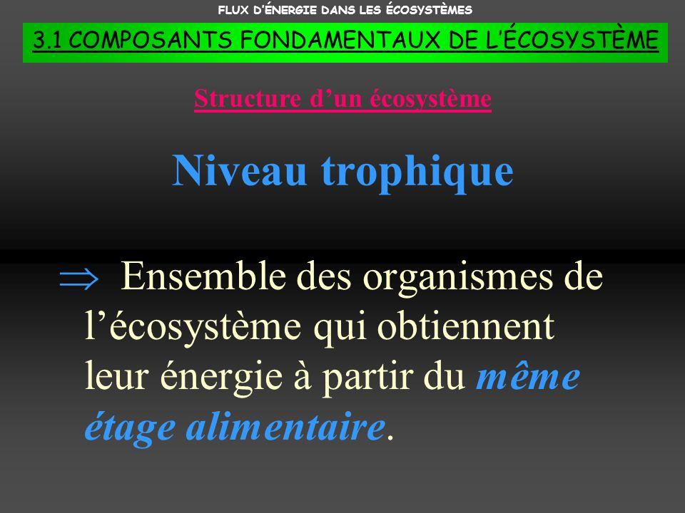 FLUX DÉNERGIE DANS LES ÉCOSYSTÈMES 3.1 COMPOSANTS FONDAMENTAUX DE LÉCOSYSTÈME Ensemble des organismes de lécosystème qui obtiennent leur énergie à par