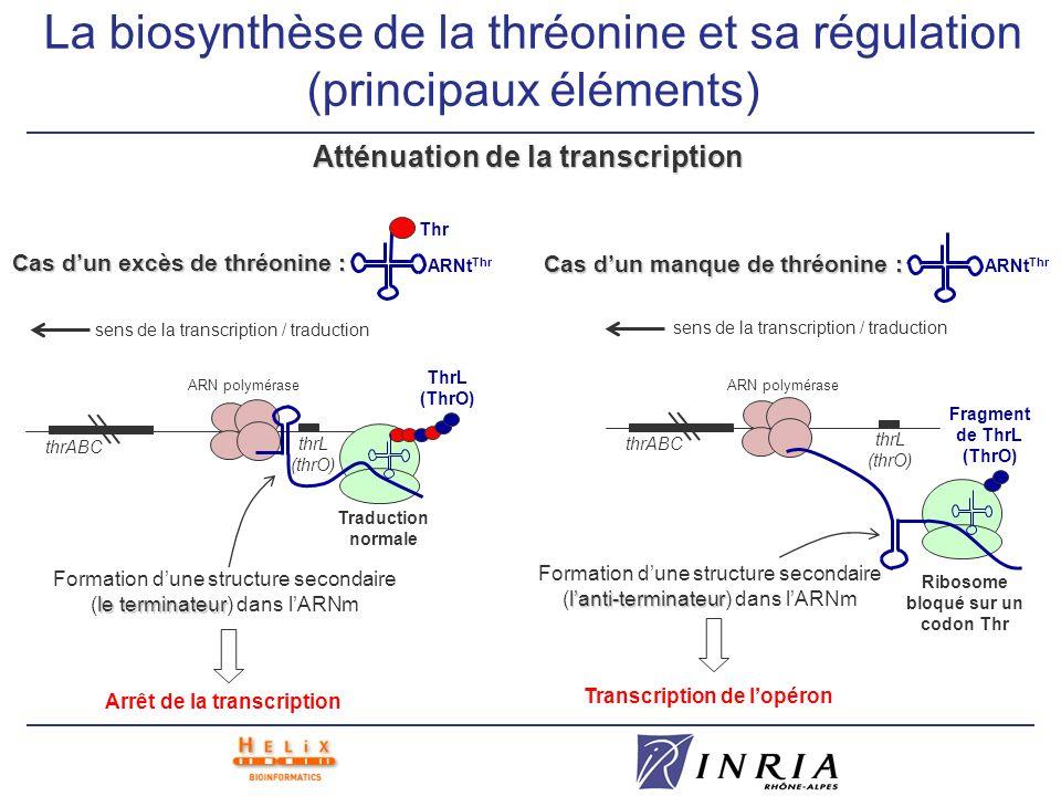 La biosynthèse de la thréonine et sa régulation (principaux éléments) Atténuation de la transcription ARNt Thr Cas dun excès de thréonine : Thr thrL (