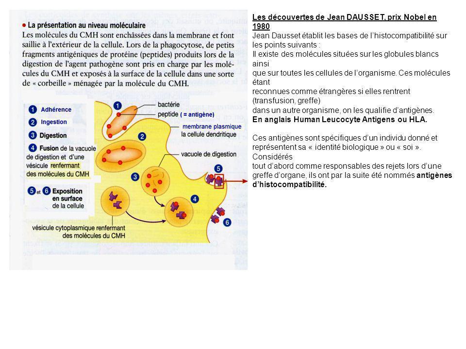 Les découvertes de Jean DAUSSET, prix Nobel en 1980 Jean Dausset établit les bases de lhistocompatibilité sur les points suivants : Il existe des molé