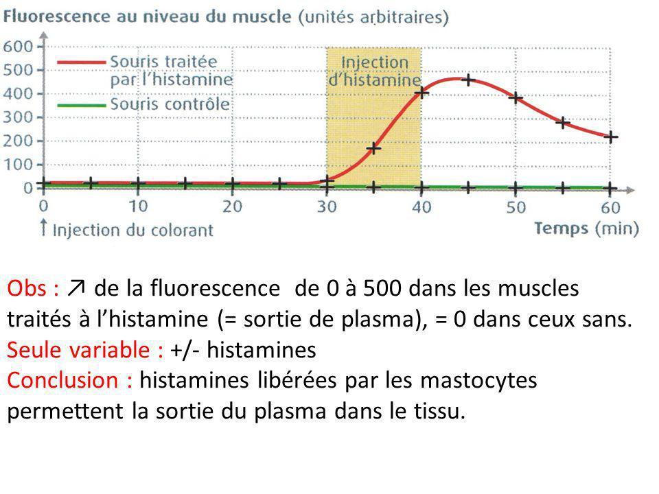 Obs : de la fluorescence de 0 à 500 dans les muscles traités à lhistamine (= sortie de plasma), = 0 dans ceux sans. Seule variable : +/- histamines Co