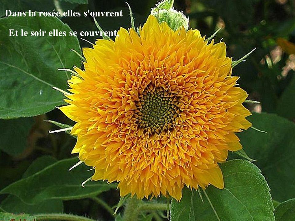 Avec toutes les couleurs, Elles apportent le bonheur... Les fleurs