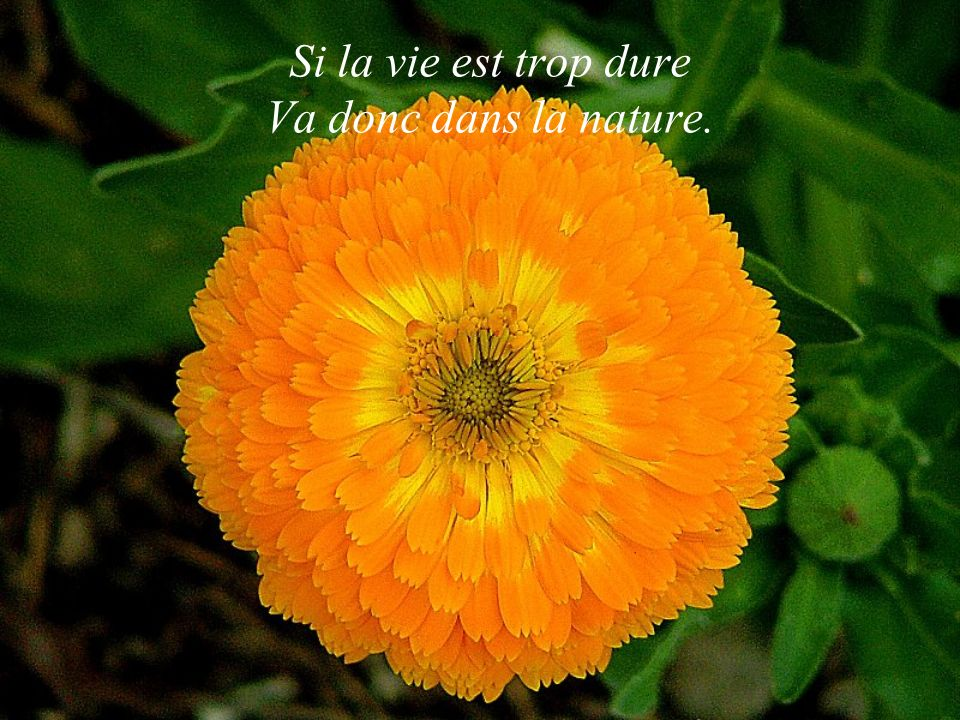 Si la vie est trop dure Va donc dans la nature.
