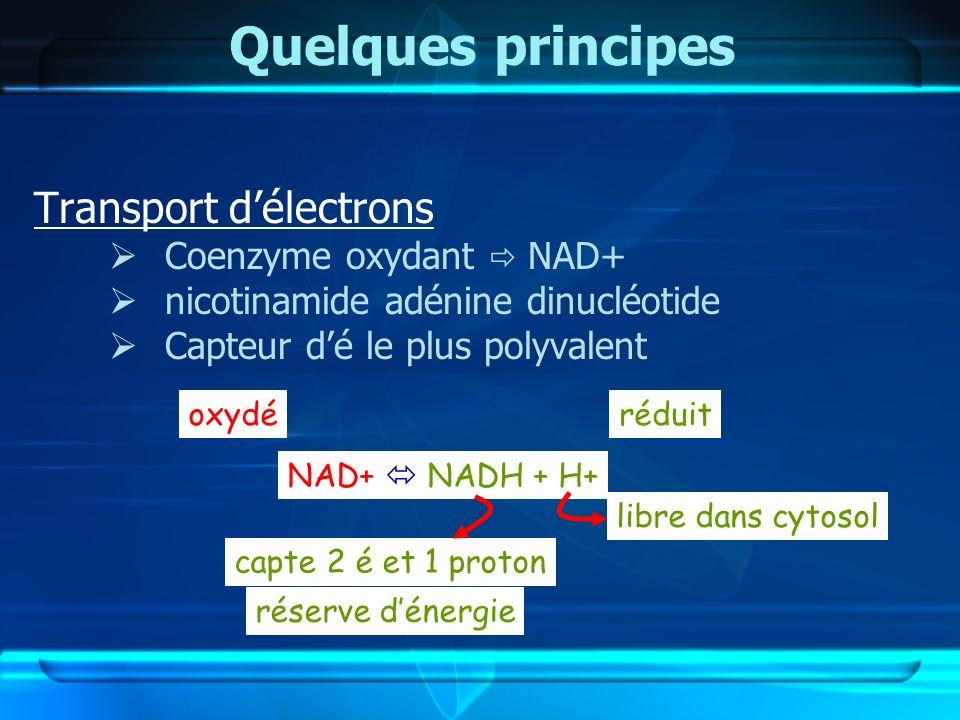 Quelques principes Transport délectrons Coenzyme oxydant NAD+ nicotinamide adénine dinucléotide Capteur dé le plus polyvalent NAD+ NADH + H+ libre dan