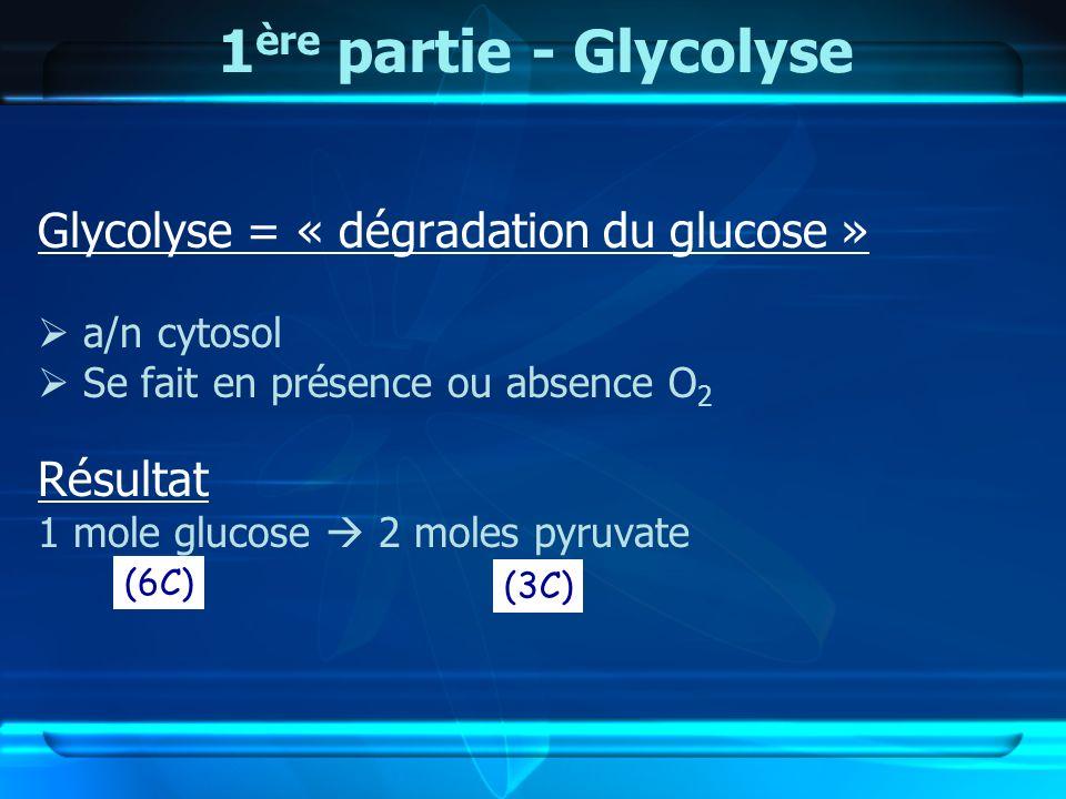 1 ère partie - Glycolyse Glycolyse = « dégradation du glucose » a/n cytosol Se fait en présence ou absence O 2 Résultat 1 mole glucose 2 moles pyruvat