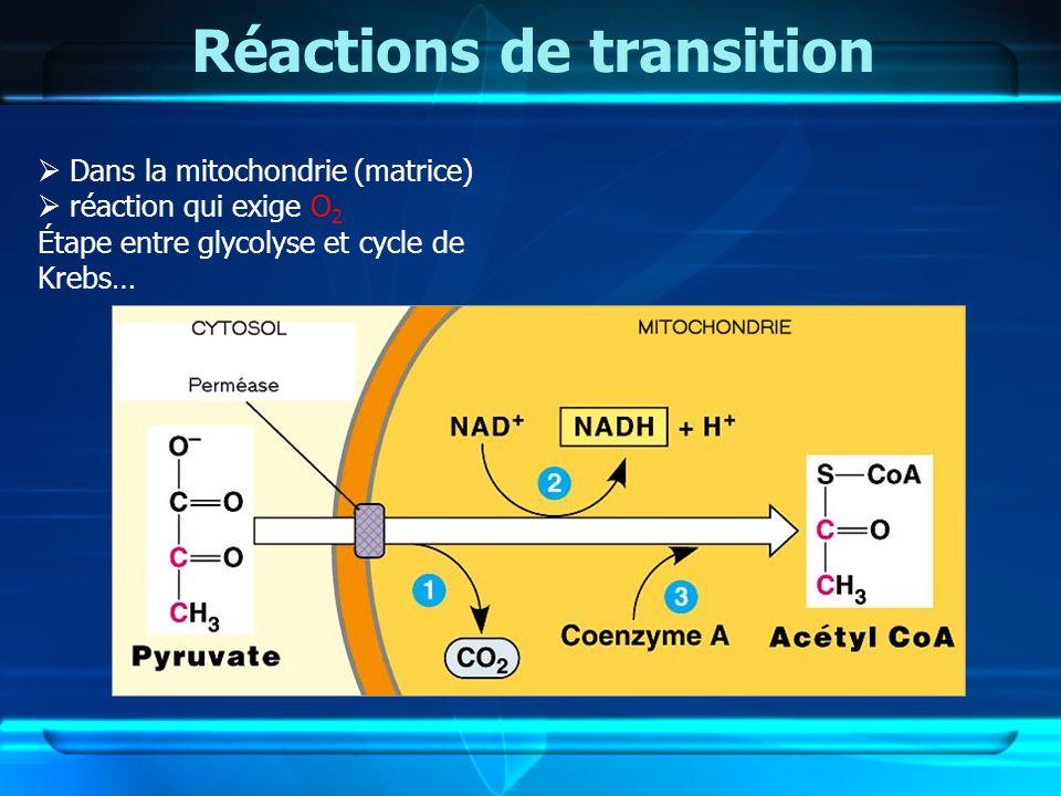 Réactions de transition Dans la mitochondrie (matrice) réaction qui exige O 2 Étape entre glycolyse et cycle de Krebs…
