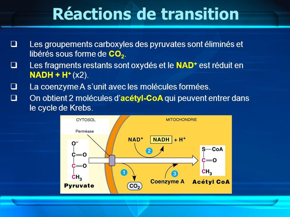 Réactions de transition Les groupements carboxyles des pyruvates sont éliminés et libérés sous forme de CO 2. Les fragments restants sont oxydés et le