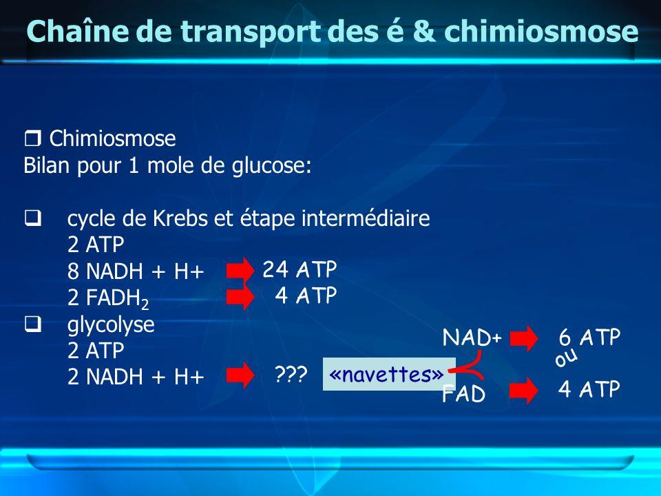 Chaîne de transport des é & chimiosmose Chimiosmose Bilan pour 1 mole de glucose: cycle de Krebs et étape intermédiaire 2 ATP 8 NADH + H+ 2 FADH 2 gly