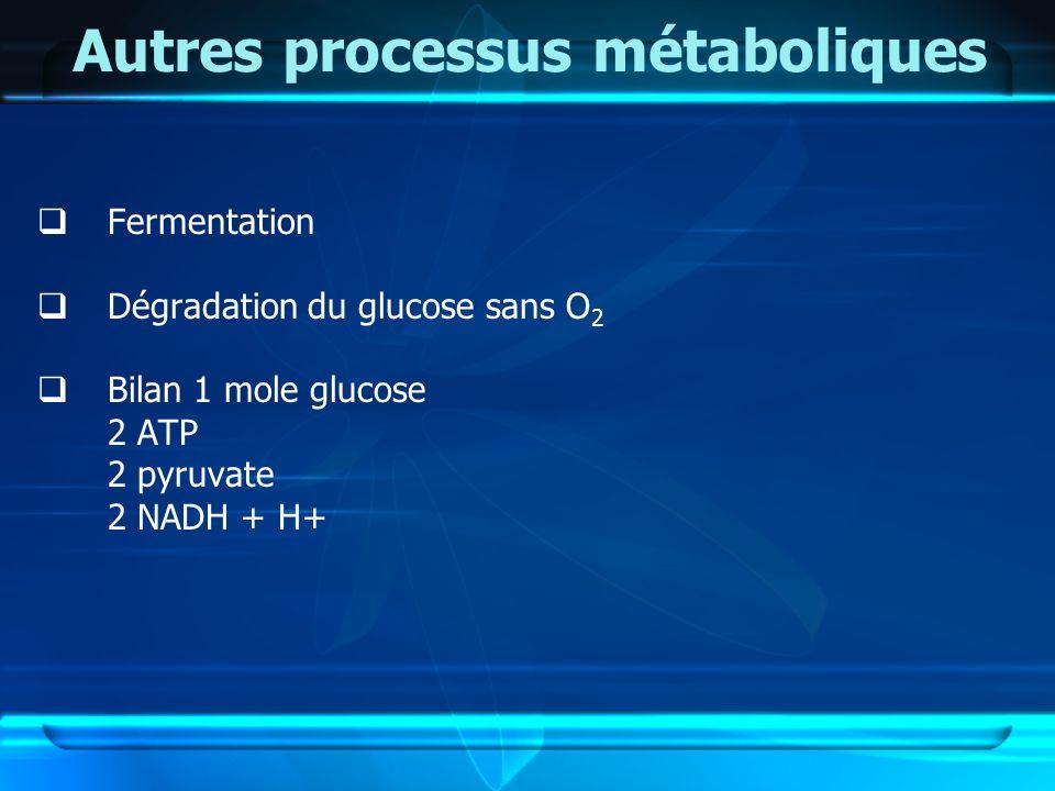 Autres processus métaboliques Fermentation Dégradation du glucose sans O 2 Bilan 1 mole glucose 2 ATP 2 pyruvate 2 NADH + H+