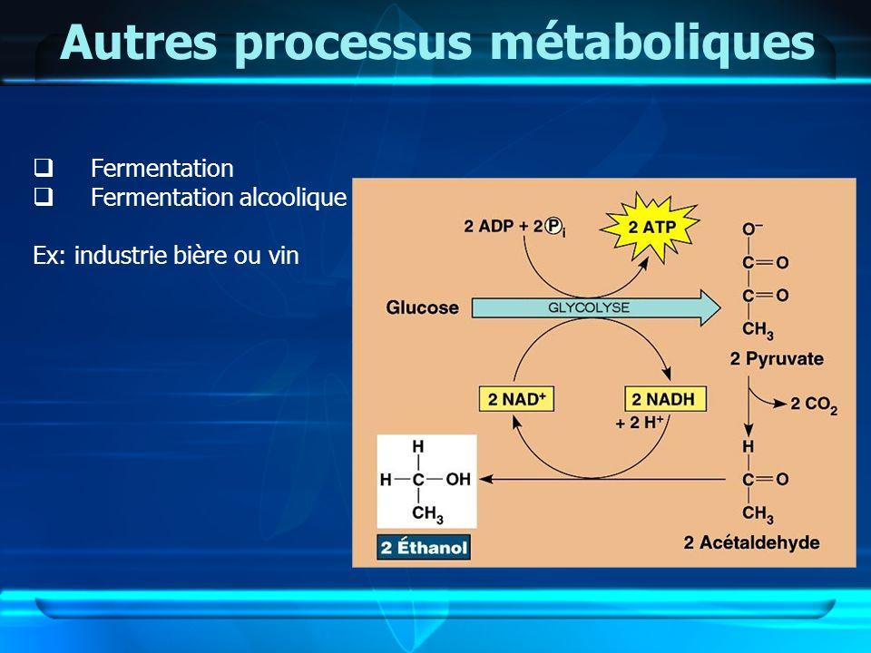 Autres processus métaboliques Fermentation Fermentation alcoolique Ex: industrie bière ou vin