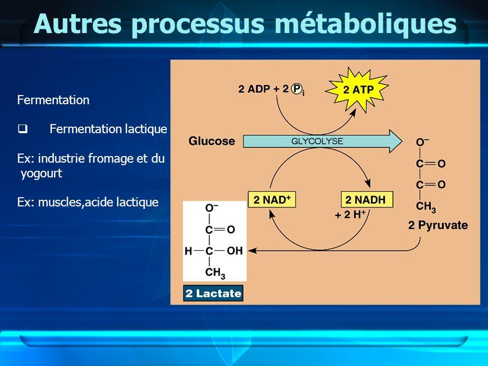 Autres processus métaboliques Fermentation Fermentation lactique Ex: industrie fromage et du yogourt Ex: muscles,acide lactique