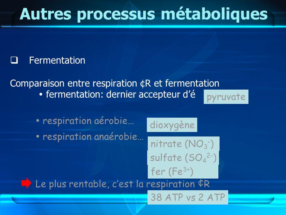 Autres processus métaboliques Fermentation Comparaison entre respiration ¢R et fermentation fermentation: dernier accepteur dé 38 ATP vs 2 ATP respira
