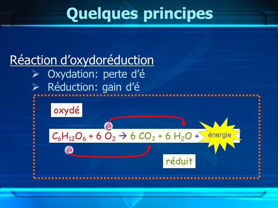 Quelques principes Réaction doxydoréduction Oxydation: perte dé Réduction: gain dé C 6 H 12 O 6 + 6 O 2 6 CO 2 + 6 H 2 O + oxydé réduit é é énergie