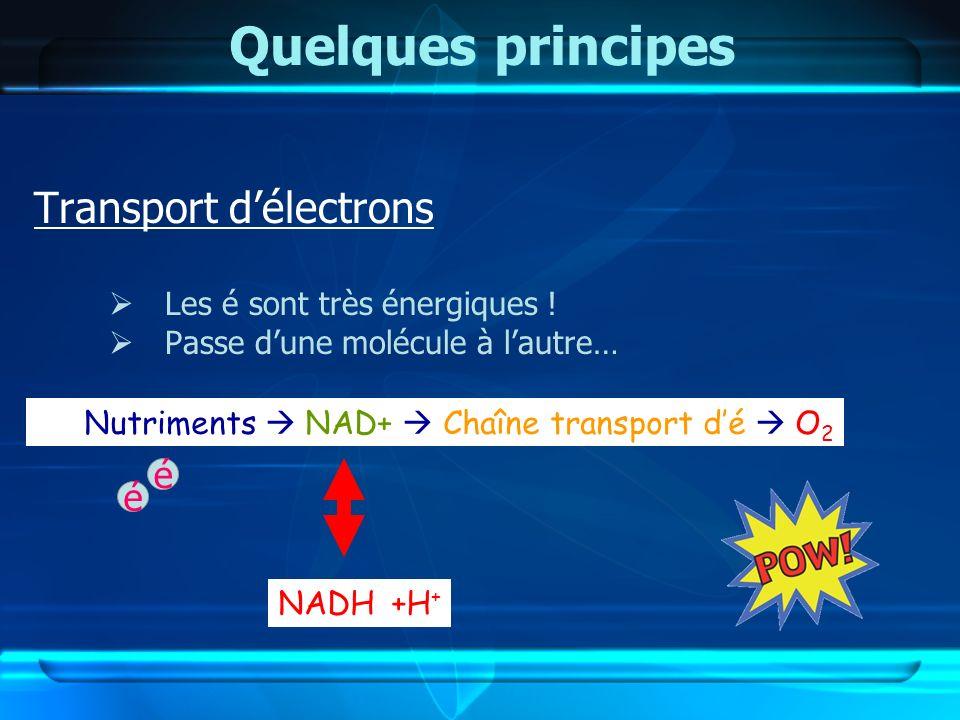 Quelques principes Transport délectrons Les é sont très énergiques ! Passe dune molécule à lautre… Nutriments NAD+ Chaîne transport dé O 2 é é NADH+H