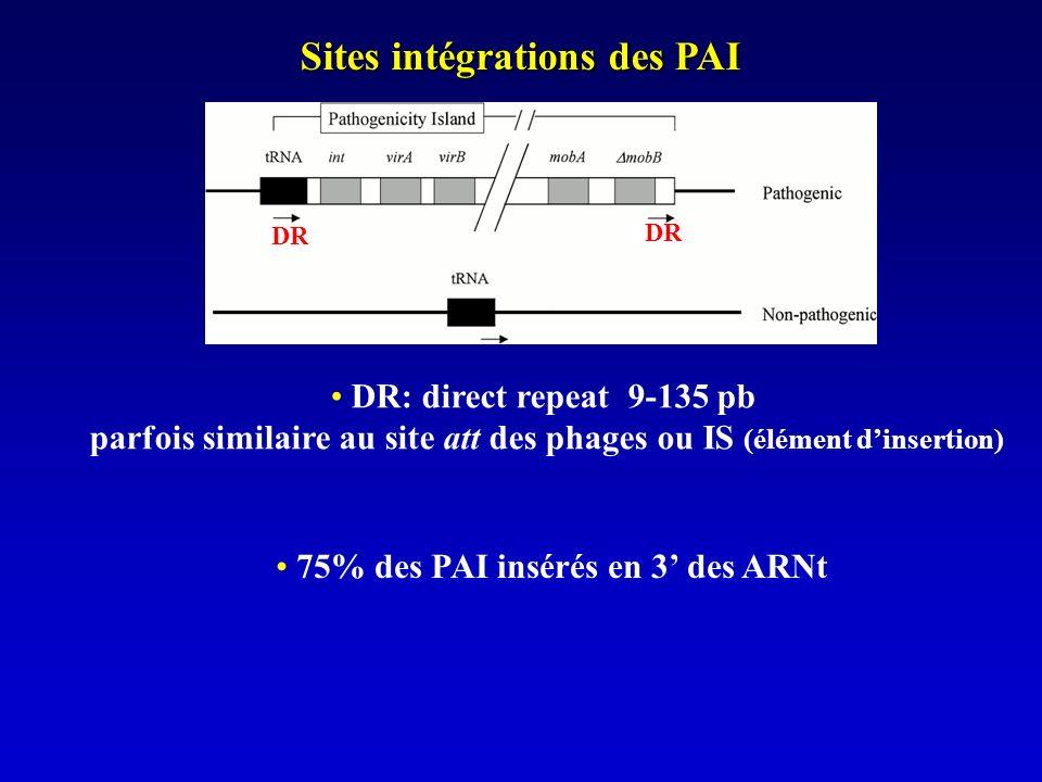 Sites intégrations des PAI 75% des PAI insérés en 3 des ARNt DR: direct repeat 9-135 pb parfois similaire au site att des phages ou IS (élément dinsertion) DR