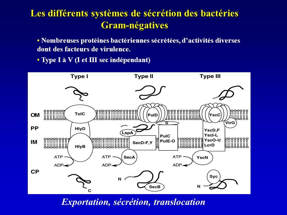 Les différents systèmes de sécrétion des bactéries Gram-négatives Nombreuses protéines bactériennes sécrétées, dactivités diverses dont des facteurs de virulence.
