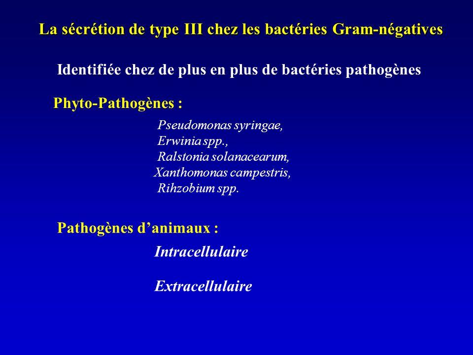 La sécrétion de type III chez les bactéries Gram-négatives Pseudomonas syringae, Erwinia spp., Ralstonia solanacearum, Xanthomonas campestris, Rihzobium spp.