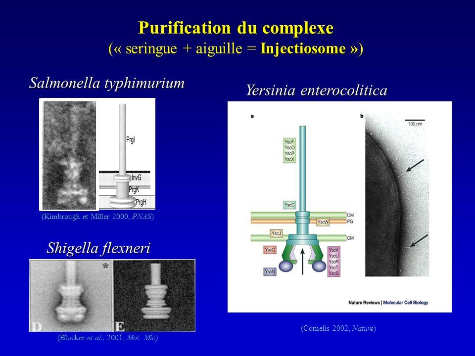 Purification du complexe Injectiosome » (« seringue + aiguille = Injectiosome ») (Kimbrough et Miller 2000, PNAS) (Blocker et al., 2001, Mol.