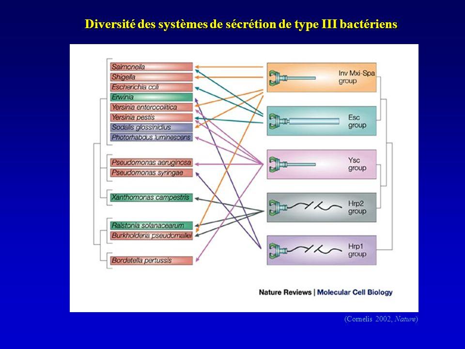 Diversité des systèmes de sécrétion de type III bactériens