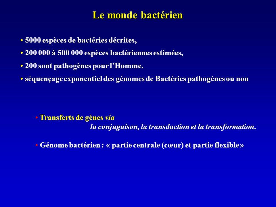Le monde bactérien 5000 espèces de bactéries décrites, 200 000 à 500 000 espèces bactériennes estimées, 200 sont pathogènes pour lHomme.