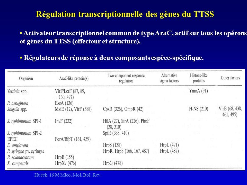 Régulation transcriptionnelle des gènes du TTSS Activateur transcriptionnel commun de type AraC, actif sur tous les opérons et gènes du TTSS (effecteur et structure).