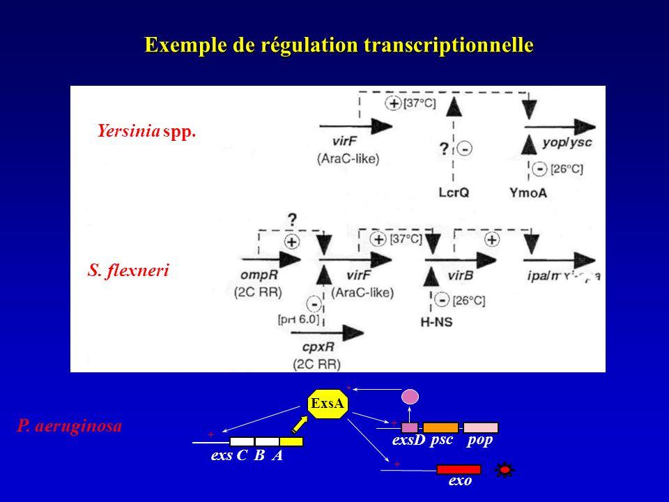 Exemple de régulation transcriptionnelle P.aeruginosa pscpop exo exs C B A ExsA + + + S.