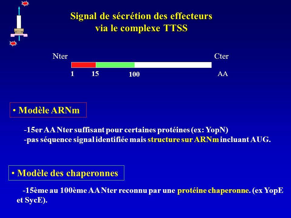 Signal de sécrétion des effecteurs via le complexe TTSS -15er AA Nter suffisant pour certaines protéines (ex: YopN) -pas séquence signal identifiée mais structure sur ARNm incluant AUG.