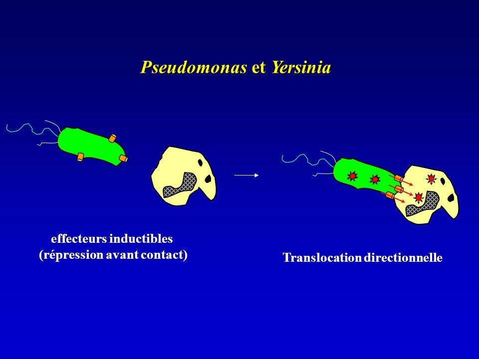 Pseudomonas et Yersinia effecteurs inductibles (répression avant contact) Translocation directionnelle