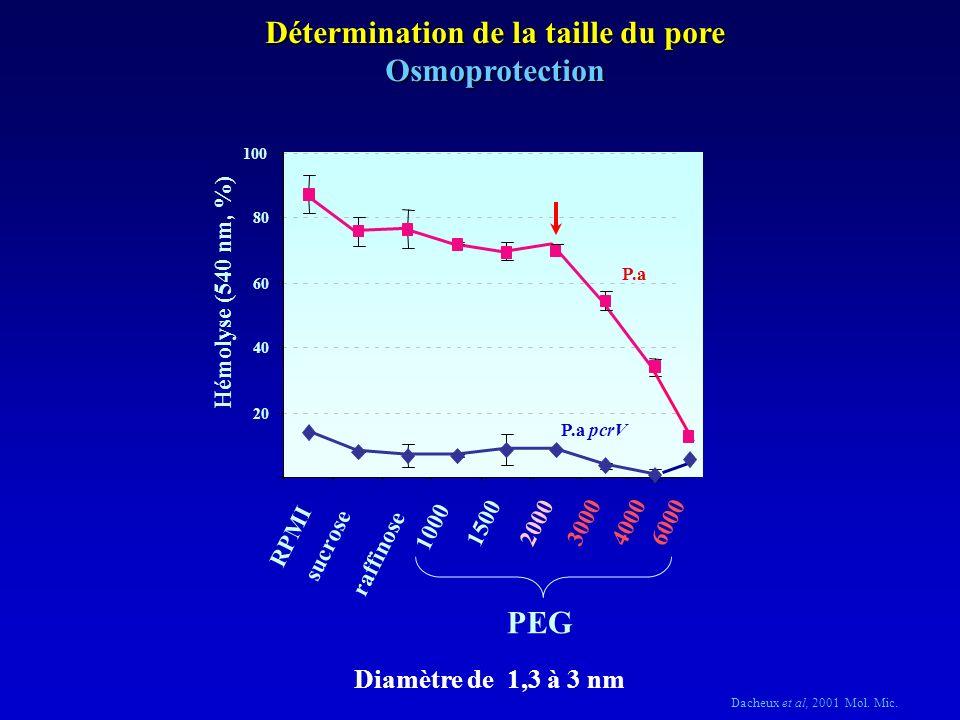 Détermination de la taille du pore Osmoprotection Diamètre de 1,3 à 3 nm Dacheux et al, 2001 Mol.
