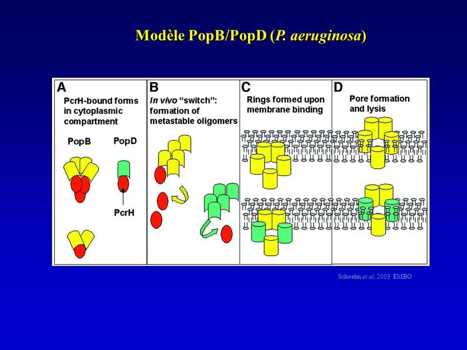 Schoehn et al, 2003 EMBO Modèle PopB/PopD (P. aeruginosa)