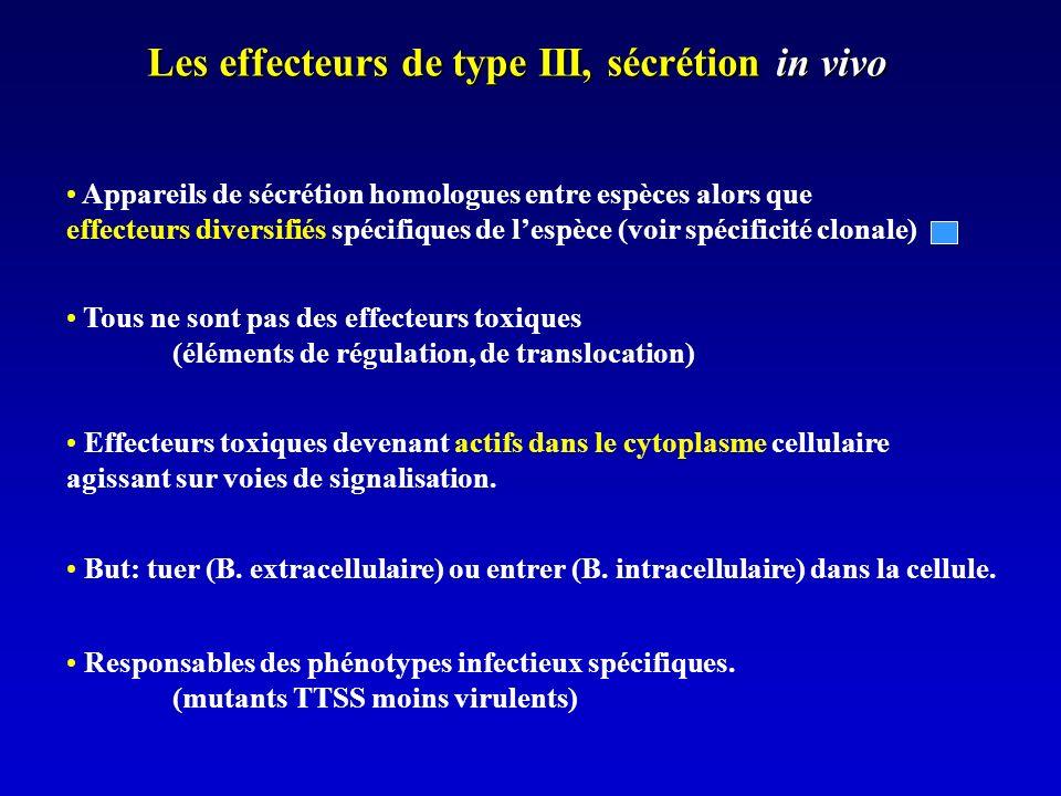 Les effecteurs de type III, sécrétion in vivo Appareils de sécrétion homologues entre espèces alors que effecteurs diversifiés spécifiques de lespèce (voir spécificité clonale) Tous ne sont pas des effecteurs toxiques (éléments de régulation, de translocation) Effecteurs toxiques devenant actifs dans le cytoplasme cellulaire agissant sur voies de signalisation.