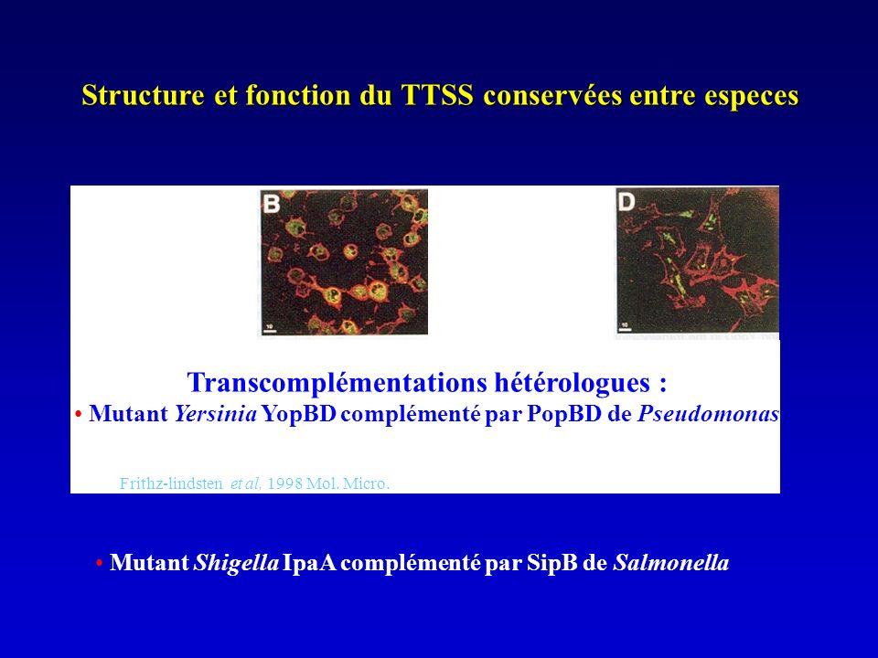 Structure et fonction du TTSS conservées entre especes Mutant Shigella IpaA complémenté par SipB de Salmonella Frithz-lindsten et al, 1998 Mol.