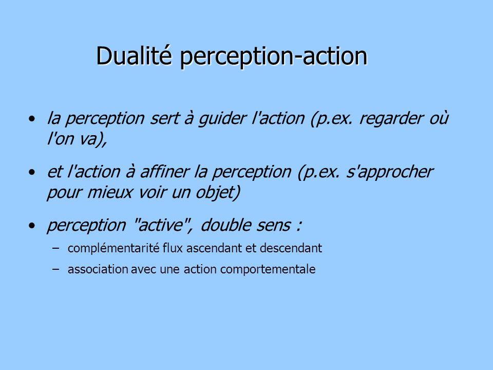 Dualité perception-action la perception sert à guider l action (p.ex.
