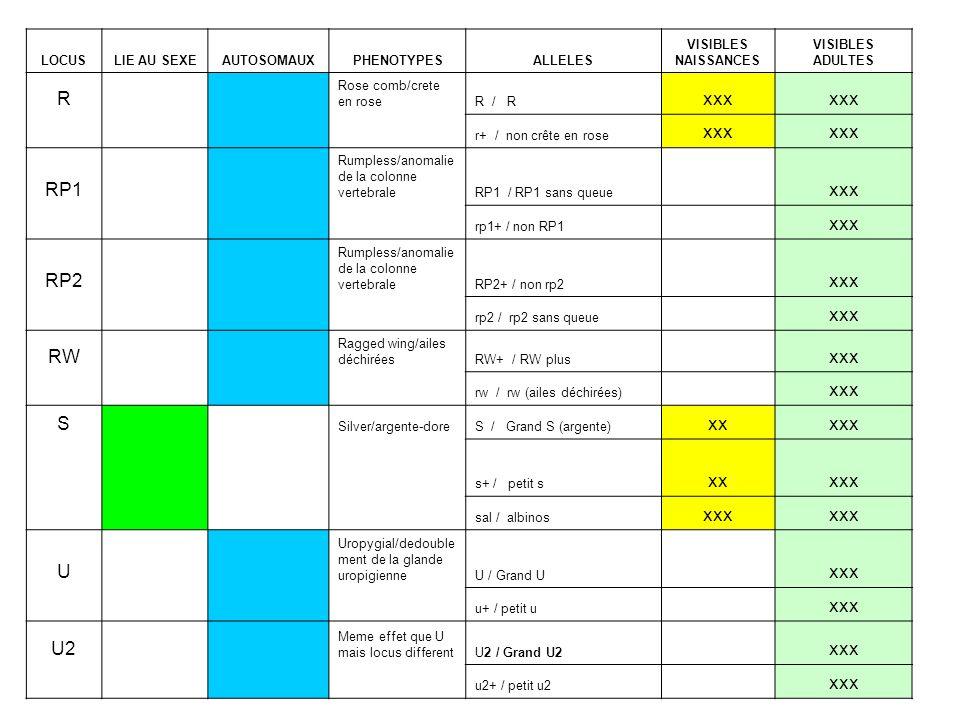 LOCUSLIE AU SEXEAUTOSOMAUXPHENOTYPESALLELES VISIBLES NAISSANCES VISIBLES ADULTES R Rose comb/crete en roseR / R xxx r+ / non crête en rose xxx RP1 Rum