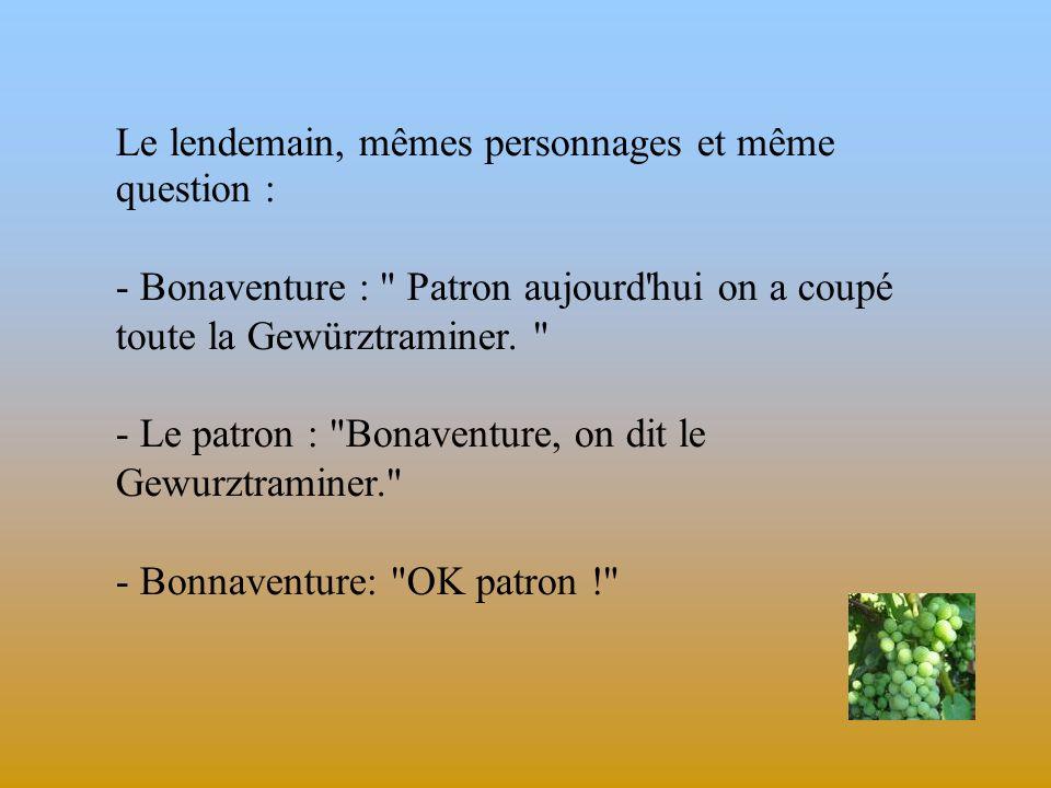 Kouillaté Boubakar Bonaventure, ivoirien de souche, fait les vendanges à Krautergersheim, petit village que tout le monde connaît en Alsace. A la fin