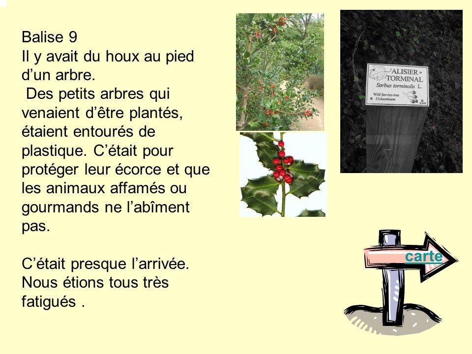Balise 9 Il y avait du houx au pied dun arbre. Des petits arbres qui venaient dêtre plantés, étaient entourés de plastique. Cétait pour protéger leur