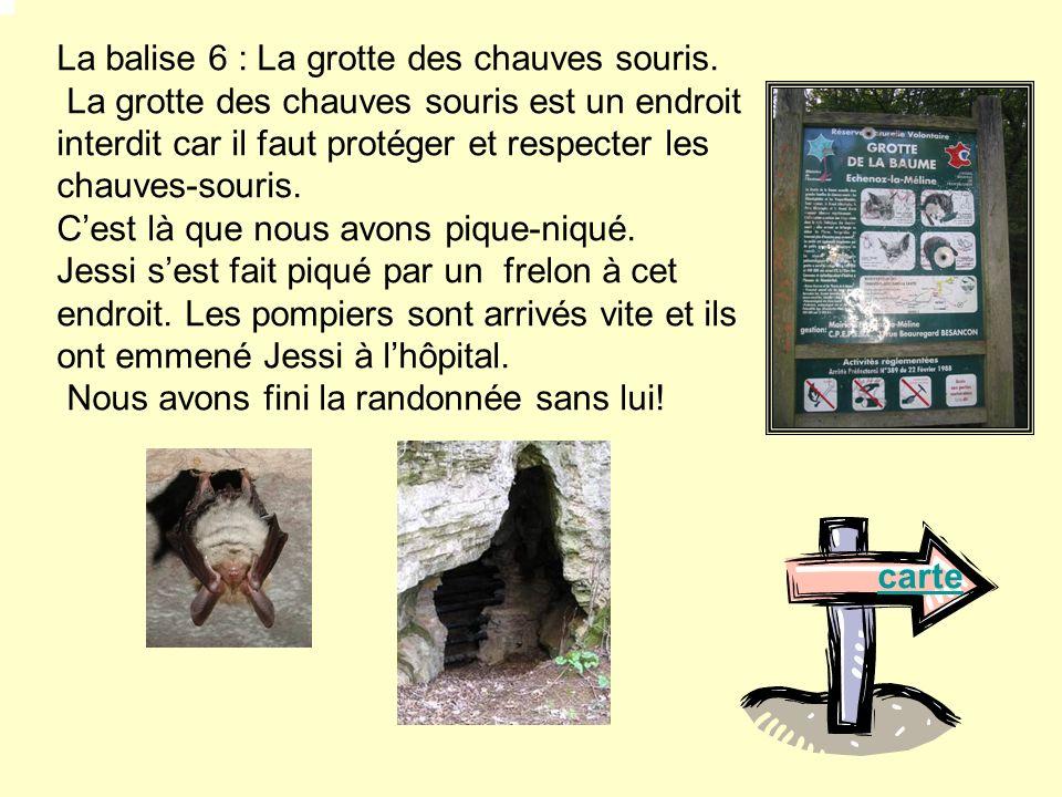 La balise 6 : La grotte des chauves souris. La grotte des chauves souris est un endroit interdit car il faut protéger et respecter les chauves-souris.