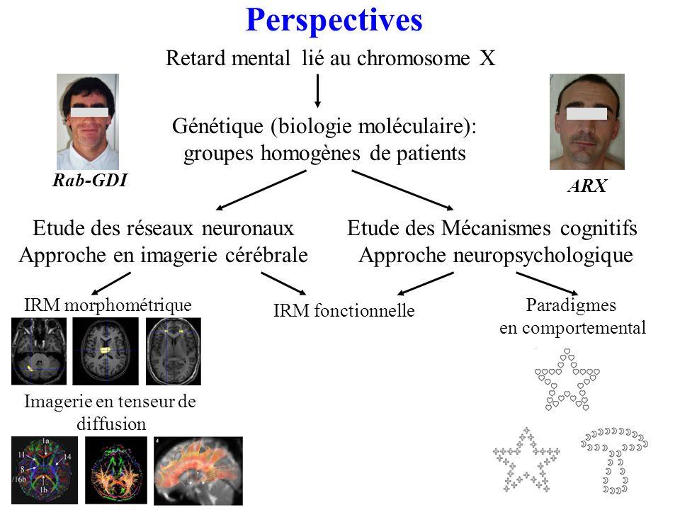 lié au chromosome X IRM fonctionnelle Etude des réseaux neuronaux Approche en imagerie cérébrale Etude des Mécanismes cognitifs Approche neuropsychologique Génétique (biologie moléculaire): groupes homogènes de patients Rab-GDI ARX IRM morphométrique Imagerie en tenseur de diffusion Paradigmes en comportemental Retard mental Perspectives
