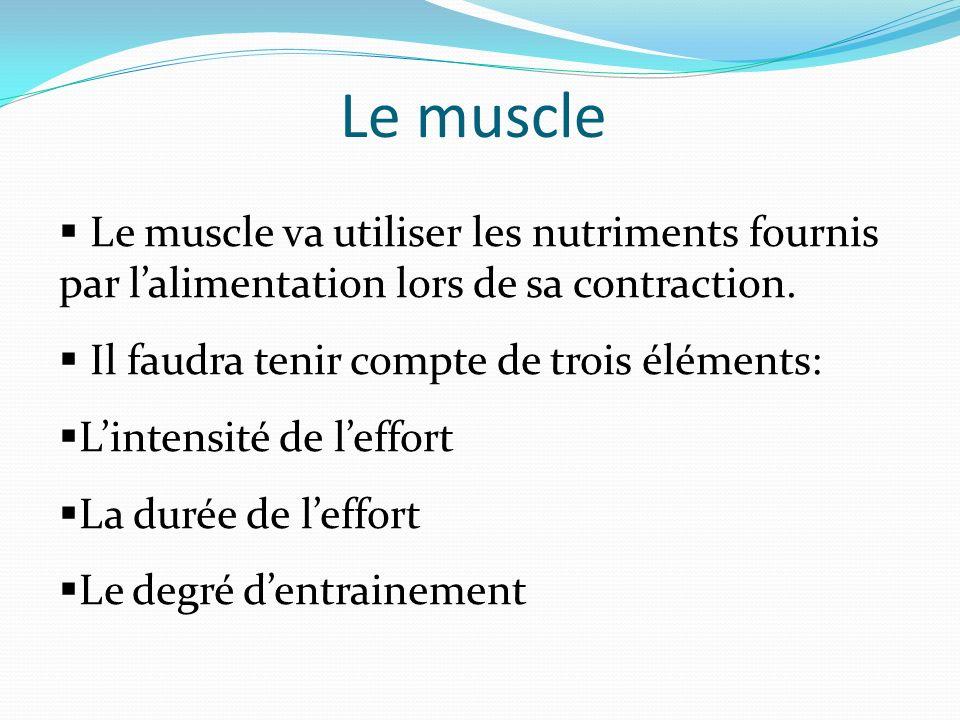 Le muscle Le muscle va utiliser les nutriments fournis par lalimentation lors de sa contraction. Il faudra tenir compte de trois éléments: Lintensité