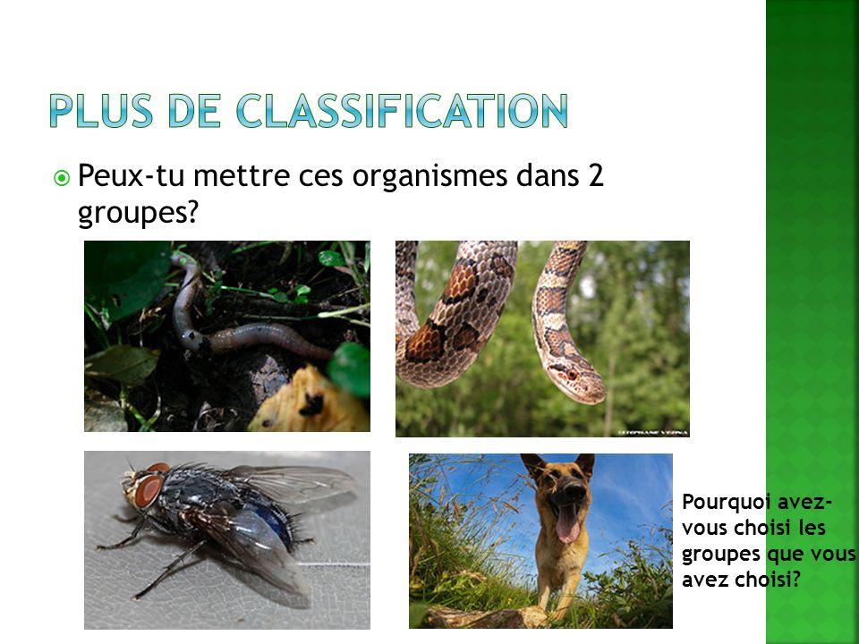 Peux-tu mettre ces organismes dans 2 groupes? Pourquoi avez- vous choisi les groupes que vous avez choisi?