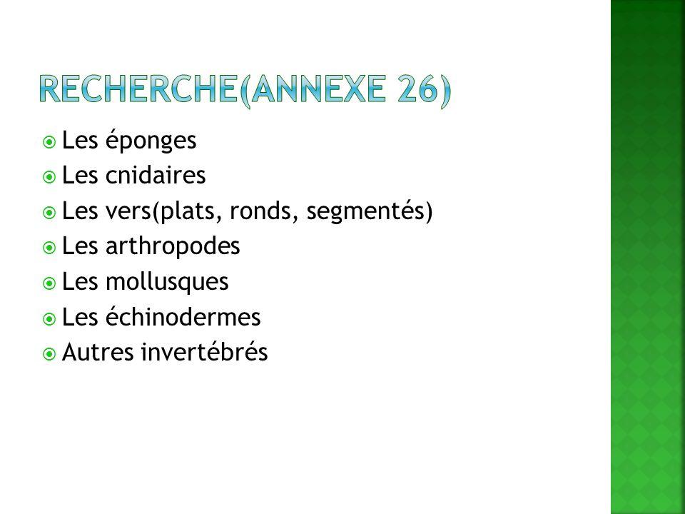 Les éponges Les cnidaires Les vers(plats, ronds, segmentés) Les arthropodes Les mollusques Les échinodermes Autres invertébrés
