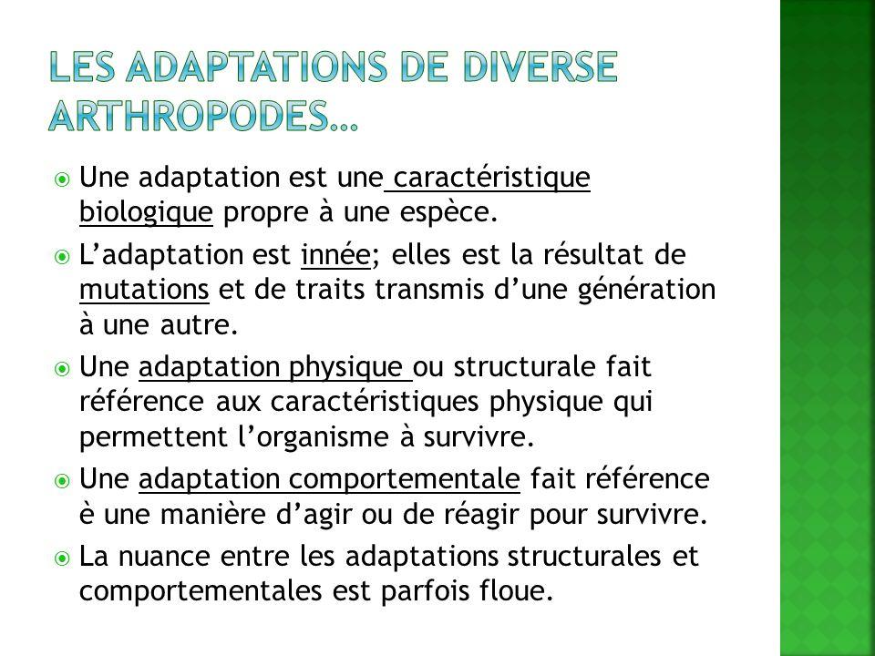Une adaptation est une caractéristique biologique propre à une espèce. Ladaptation est innée; elles est la résultat de mutations et de traits transmis