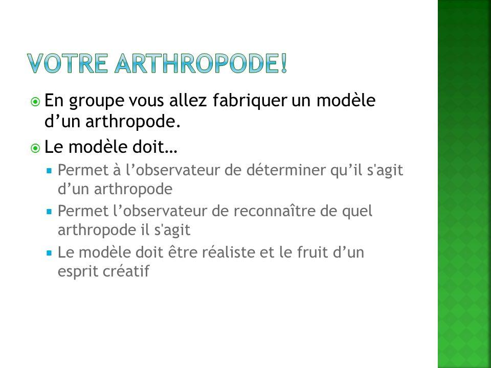 En groupe vous allez fabriquer un modèle dun arthropode. Le modèle doit… Permet à lobservateur de déterminer quil s'agit dun arthropode Permet lobserv