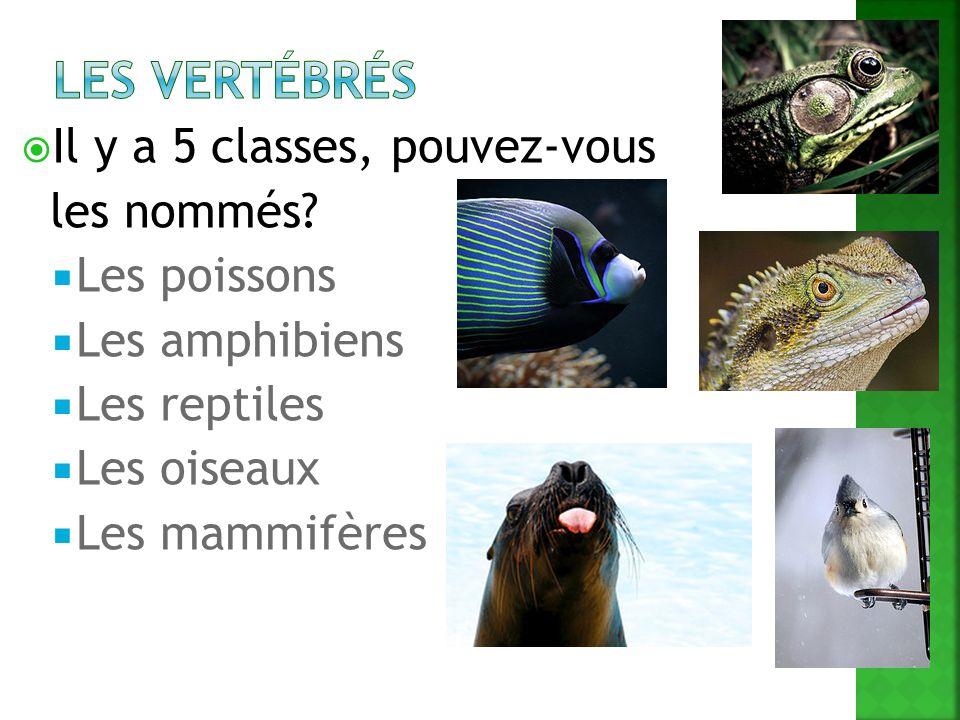 Il y a 5 classes, pouvez-vous les nommés? Les poissons Les amphibiens Les reptiles Les oiseaux Les mammifères