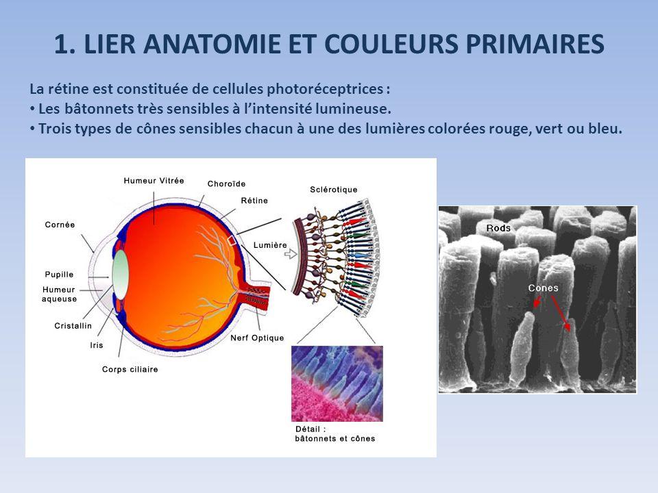 1. LIER ANATOMIE ET COULEURS PRIMAIRES La rétine est constituée de cellules photoréceptrices : Les bâtonnets très sensibles à lintensité lumineuse. Tr