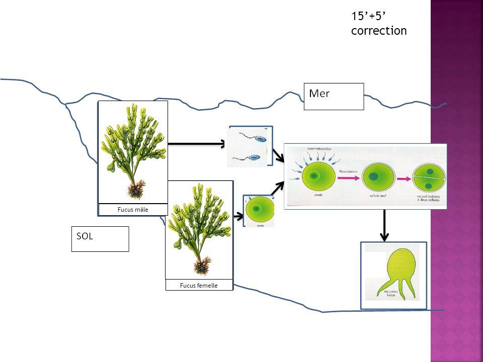 2.Fucus et milieu aquatique Il existe aussi une reproduction sexuée chez les végétaux aquatiques.