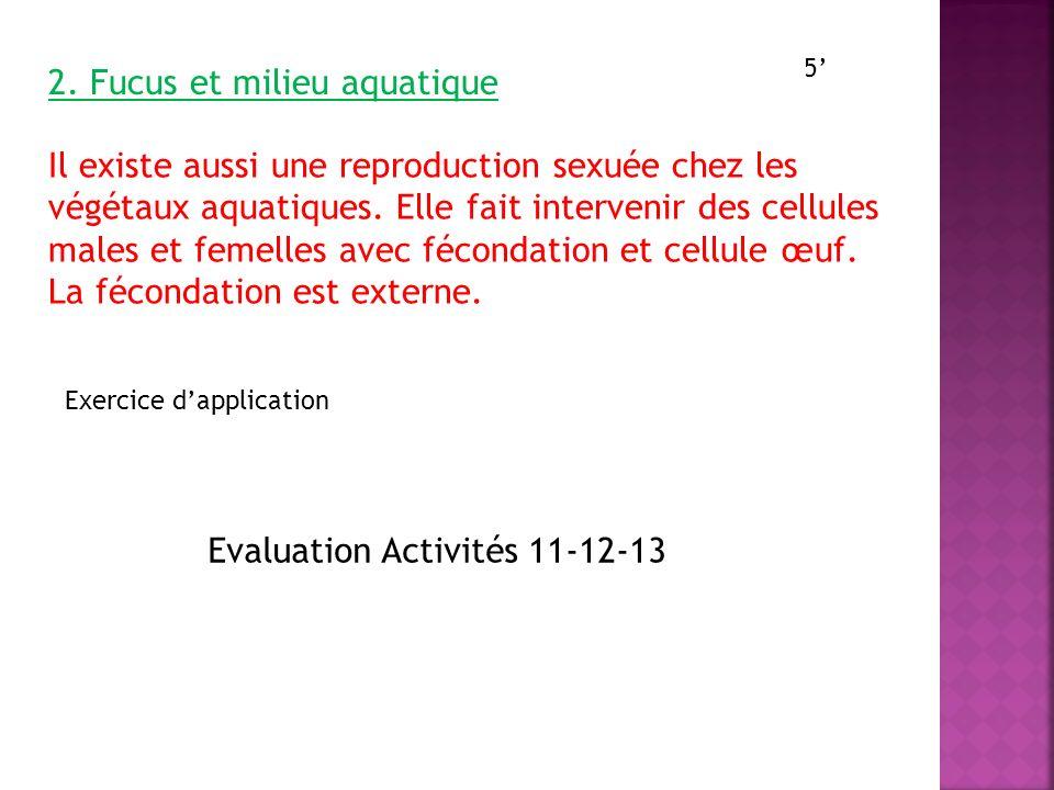 2. Fucus et milieu aquatique Il existe aussi une reproduction sexuée chez les végétaux aquatiques. Elle fait intervenir des cellules males et femelles