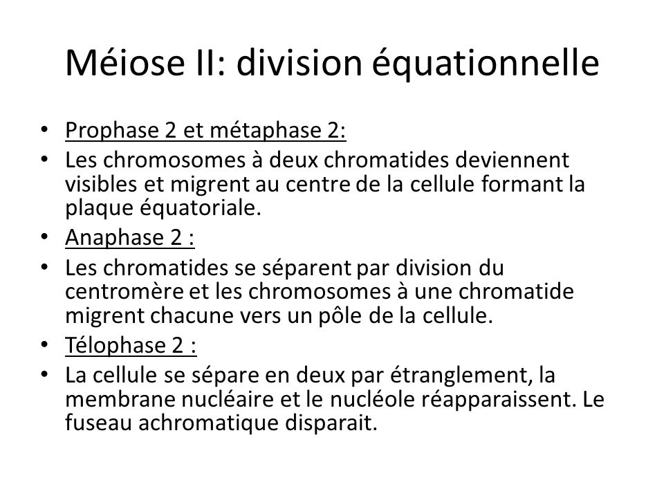 Méiose II: division équationnelle Prophase 2 et métaphase 2: Les chromosomes à deux chromatides deviennent visibles et migrent au centre de la cellule formant la plaque équatoriale.
